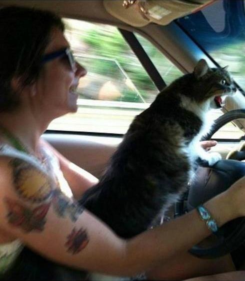 猫星人开车爽翻了!