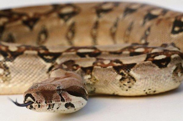 英国一男子去动物园偷两条大蛇 送女儿做生日礼物