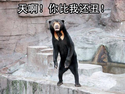 [福利]国家一级保护动物的表情包 画风粗犷收好不谢