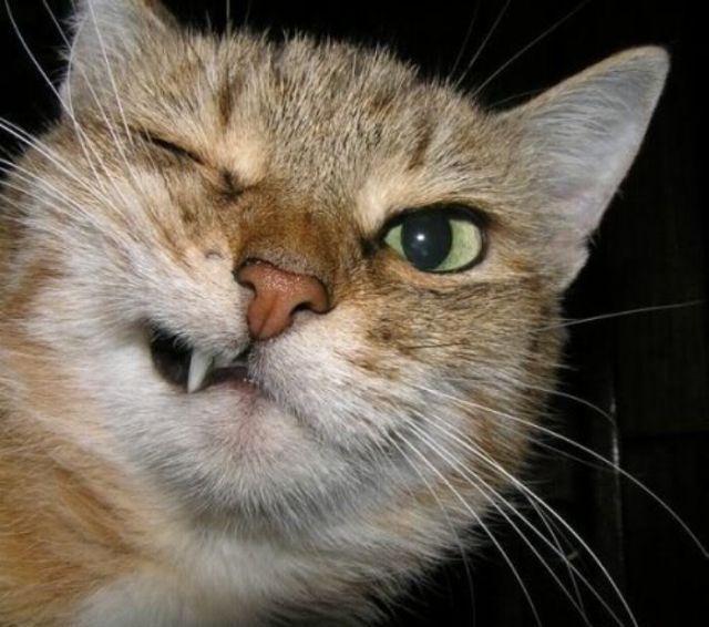 壁纸 动物 猫 猫咪 小猫 桌面 640_566