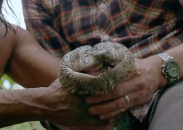 2米全球最长?亚马逊密林现蟒蛇王