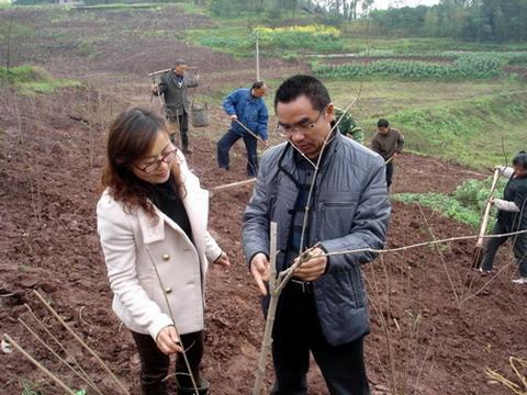 铜梁:瞄准主城花卉市场兴建梅花苗木基地