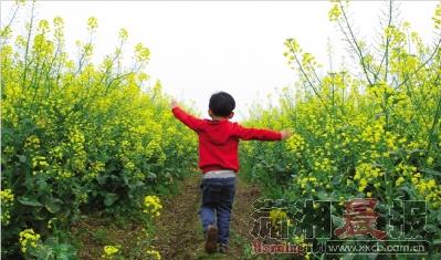 4月7日,常德,明园蜂业油菜花基地,小朋友在花海里奔跑.图/记者沈荣华图片
