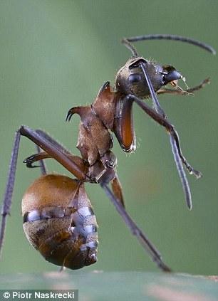 蚂蚁星球 Planet Ant: Life Inside the Colony [2013][1080p]