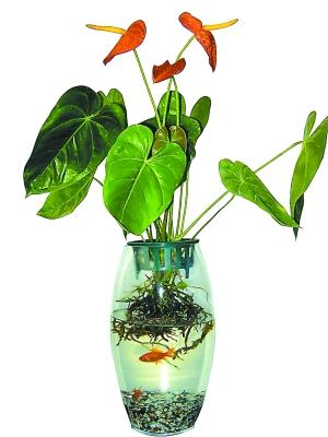 好看的水培植物图片