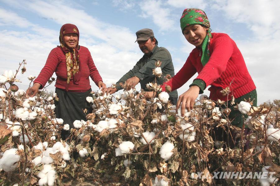 9月17日,在新疆巴音郭楞蒙古自治洲库尔勒市,来自新疆和田地区的农民