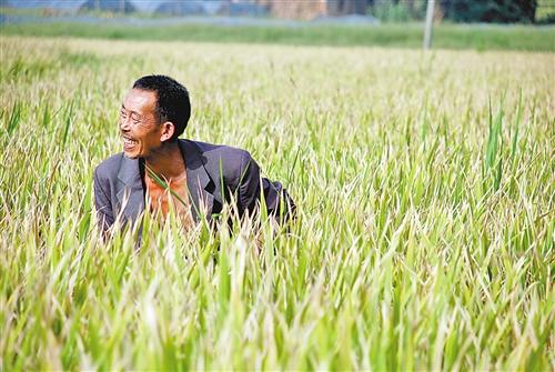 南川大观镇铁桥村,水稻丰收了,农民乐开怀。 记者 向婧 摄 口粮占比低 重庆粮食虽无近虑但有远忧 记:我市目前粮食生产形势如何? 张:直辖以来,我市各级党委和政府高度重视粮食生产,依靠科技提高单产,近几年粮食总产量基本保持在1100万吨以上,粮食自给率稳定在90%左右。 重庆的粮食安全虽然近期无虑,但远期堪忧。随着城市人口大量增加、种粮农民减少,全市口粮需求量将刚性增加,商品粮的产需矛盾将日益突出。重庆目前人均粮食占有量虽与全国平均水平基本相当,但由于农业生产条件较差,粮食生产的品种结构与消费需求存在一