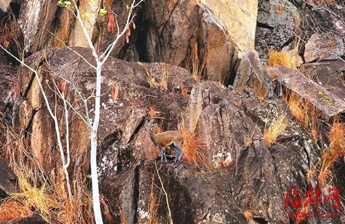 非洲博茨瓦纳乔贝国家公园,岩上的山羚