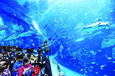 购买此年卡,可享无限次畅游海昌旅游集团旗下的大连老虎滩,青岛,天津
