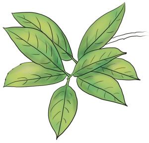 背景 壁纸 绿色 绿叶 盆景 盆栽 树叶 植物 桌面 300_288