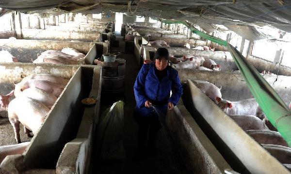 肥西县花岗镇一家生猪规模养殖户的工作人员在给猪圈消毒(3月27日摄).