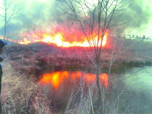 河南官员为拍照取乐烧树苗 几十亩林被焚(图) - 高山松 - gaoshansong.good 的博客