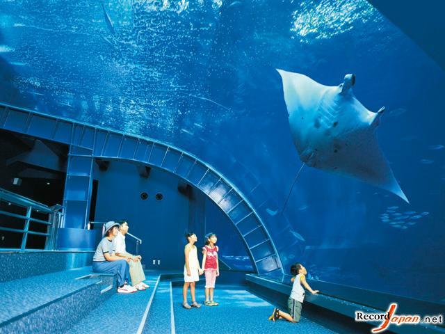 第1位 冲绳美丽海水族馆(冲绳县)  第2位 旭川市旭山动物园(北海道)