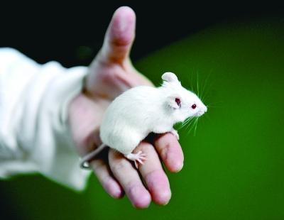 微型光电子器件可安全植入鼠脑