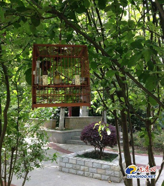 小广场里市民将鸟笼挂在树上