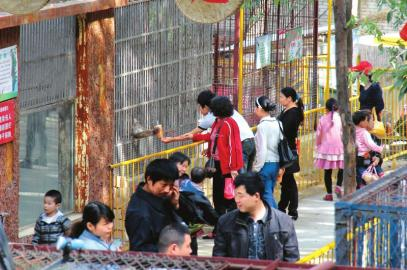太胖了 广元动物园狮子减肥