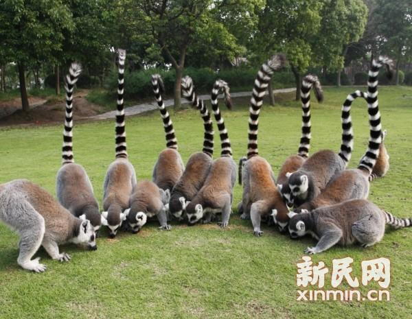 上海野生动物园非洲动物节上演动物狂欢