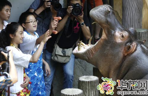 今天下午,30多位小朋友走进重庆动物园,体验了几小时的饲养员生活.