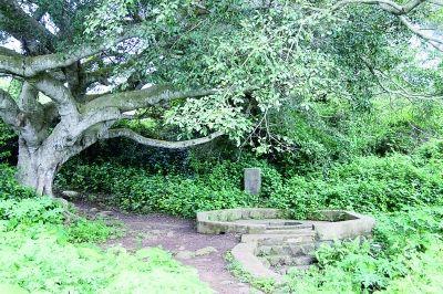 """硇洲岛古榕树下相传为南宋军民所凿的""""宋皇井""""。"""