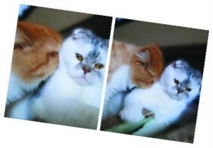 陈乔恩衣食住行宠爱猫咪