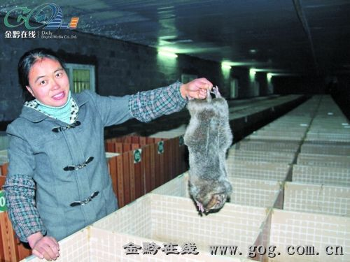 贵州思南建成28个竹鼠养殖场