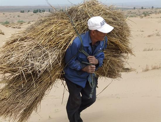 沙漠上扎草方格的两兄弟