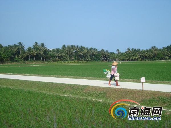 (南海网记者杨曦摄)-海南连续12年耕地占补平衡 土地整治投入超