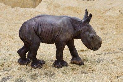组图:台动物园萌态动物大集合 可爱到不可思议