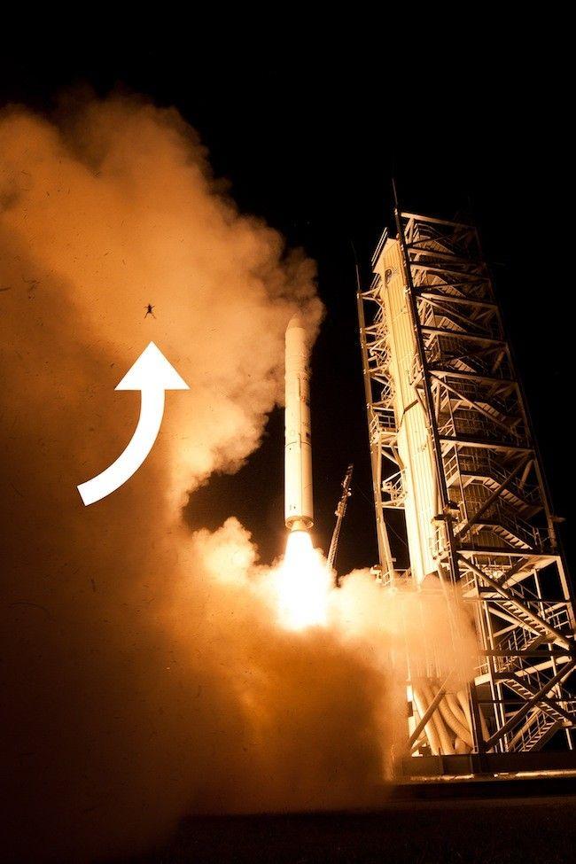 美NASA火箭发射升空 青蛙被爆炸气流吹上天(图)