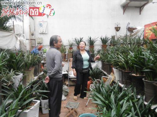 位顾客介绍兰花品种-节俭迎接国庆节今年的十一鲜花少了