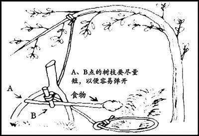 野外捕猎绳套法图解
