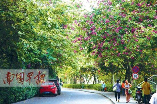 道路植物景观设计常用的有哪些种答:城市道路景观设计常用植物有哪五