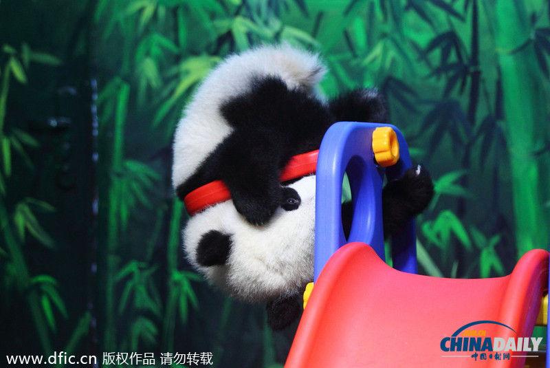 学吃竹子练倒立 2014年2月16日,广东省广州市,长隆野生动物世界,熊猫