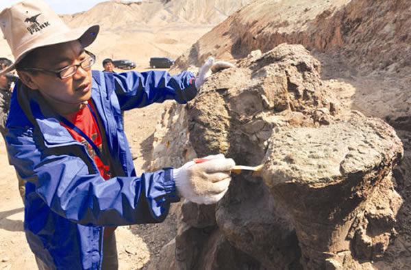鄯善出土中国最大规模侏罗纪恐龙足迹化石群