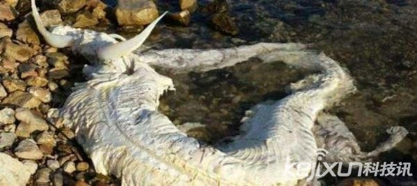 西班牙海滩惊现身长6米一对犄角白色海怪