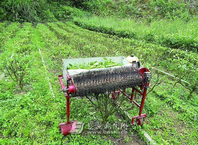 機器人採茶_便携式电动采茶机单人采茶机口唇采茶_龙太子供应网